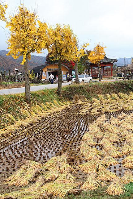 Đường vào làng cổ HanDong (Gyeongju) – di sản văn hóa thế giới.
