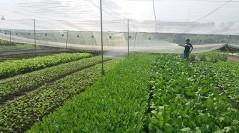 Cơ hội cho sản phẩm hữu cơ mở rộng thị trường