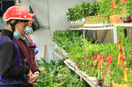 Khách hàng chọn mua hoa kiểng trên đường Lê Hồng Phong, quận 10.  Ảnh: Tùng Lê