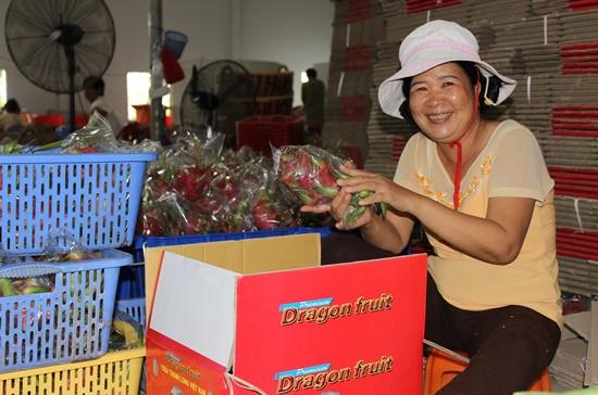 Công nhân Hợp tác xã Tầm Vu, tỉnh Long An, đang đóng gói thanh long để xuất khẩu. Ảnh: Khải Huyền