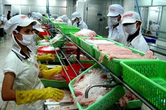 Việc đồng rúp Nga mất giá đã ảnh hưởng đến xuất khẩu thủy sản sang thị trường này. Trong ảnh là chế biến cá tra phi lê tại một doanh nghiệp. Ảnh minh họa: Trung Chánh