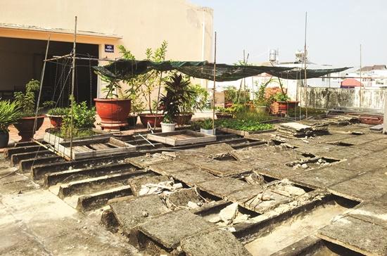Khu vườn trên sân thượng lúc còn ngổn ngang.