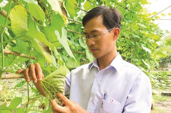 """Hàng ngày, anh kỹ sư nông nghiệp trẻ tên Phiên đi kiểm tra để điều tiết phân, thuốc phù hợp đảm bảo hoa màu nở, trổ đúng """"kịch bản"""" của đường hoa xuân Phú Mỹ Hưng năm nay."""
