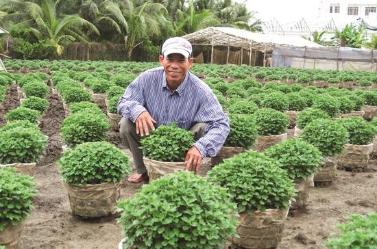 Sản lượng tăng, nhiều người trồng hoa đang lo hoa giảm giá. Ảnh: Trung Chánh