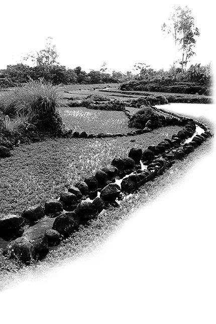 Mương dẫn nước tưới ruộng rau liệt (xà lách xoong) ở thôn Hảo Sơn.