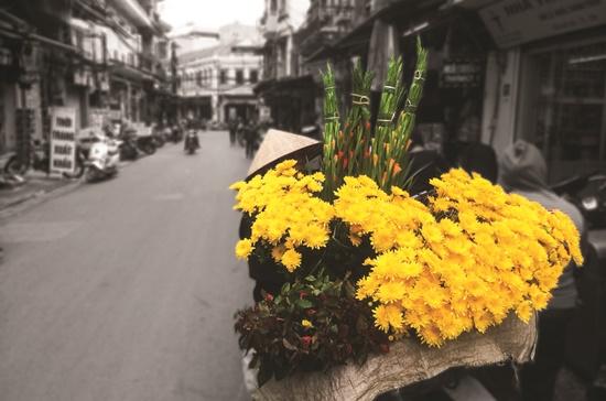 Hoa trên phố.