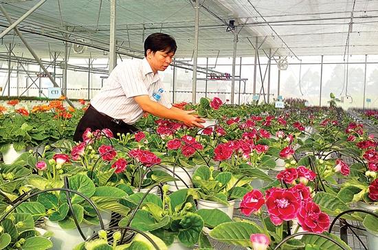 Kiểm tra tình trạng sinh trưởng của hoa bằng phương pháp trồng công nghệ cao. Ảnh: Ngọc Hùng
