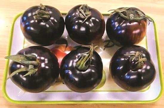 Một giống cà chua màu đen-tím đang được bán tại TPHCM từ nhà vườn Đà Lạt qua buôn bán cá nhân.    Ảnh: Quốc Hiếu