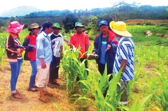 Nhân viên một tổ chức phi chính phủ trong những dự án hỗ trợ nông dân phát triển nông nghiệp ở Lâm Đồng.
