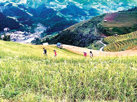 Du khách có thể đi giữa những sóng lúa bậc thang Tây Bắc để ngắm cảnh.
