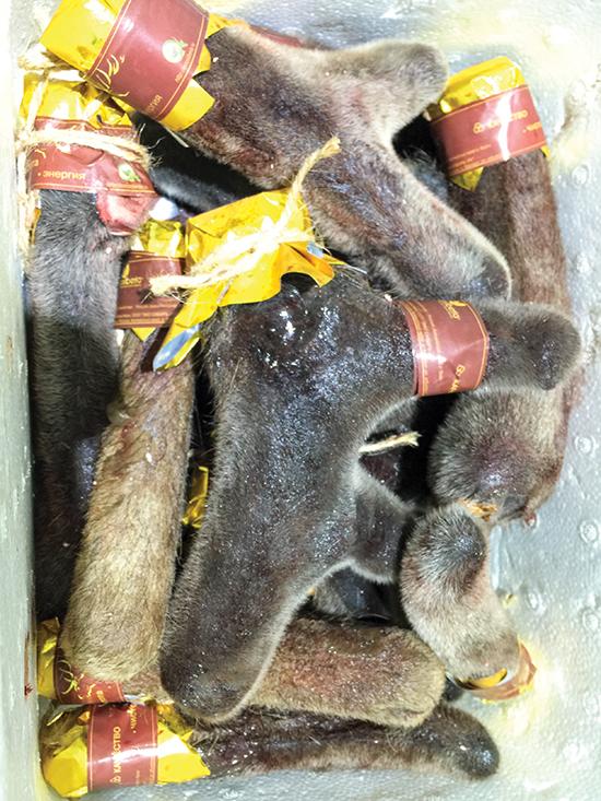 Nhung hươu nhập khẩu từ vùng Siberia (Nga) có giá bán khoảng 12 triệu đồng/kg.  Ảnh: Hoàng Nhung