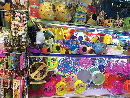 Pet1-Nhiều-loại-đồ-chơi-dành-cho-thú-cưng-bán-tại-một-cửa-hàng-ở-quận-Phú-Nhuận,-TPHCM.-Ảnh-Đỗ-Phương