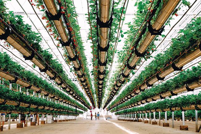 Thái Lan đẩy mạnh xuất khẩu nông sản hữu cơ