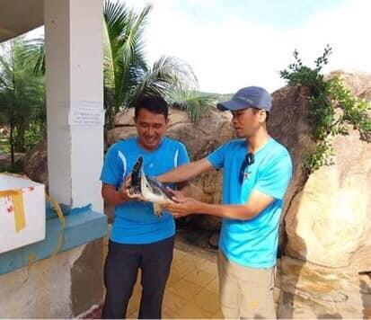cứu hộ rùa biển
